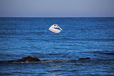 Photograph - Egret On Caspersen by Michiale Schneider