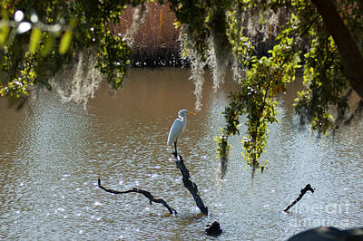Photograph - Egret On Stump by Dale Powell