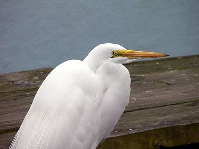 Egret On The Dock Art Print by Al Powell Photography USA