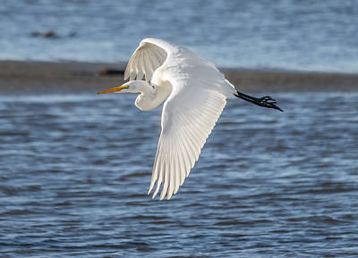 Photograph - Egret On The Move by Loree Johnson