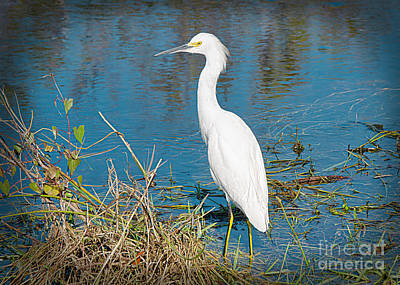 Photograph - Egret On The River Bank by Judy Kay