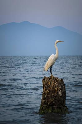 Egret On Tree Stump At Lake Chapala Art Print by Dane Strom