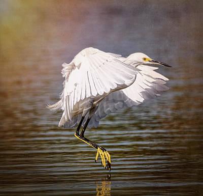Photograph - Egret Pond  by Saija Lehtonen