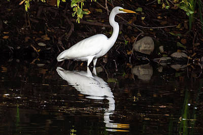Photograph - Egret Reflection by Jack Peterson