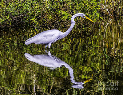 Photograph - Egret Reflection by Nick Zelinsky