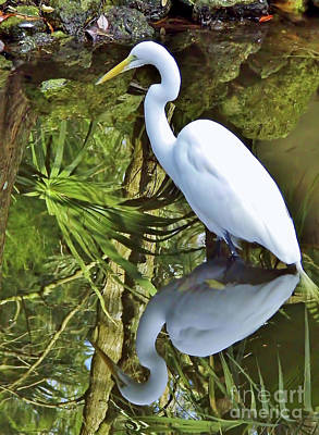 Photograph - Egret Reflections by D Hackett