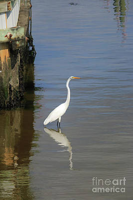 Photograph - Egret Reflections by Mary Haber
