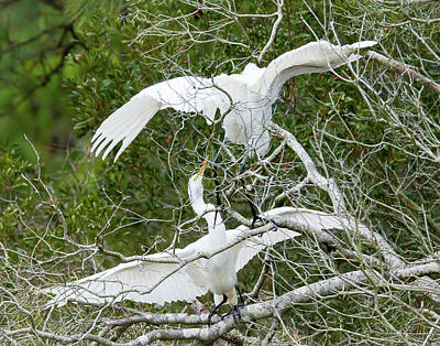 Egret Rumble Art Print by George Randy Bass