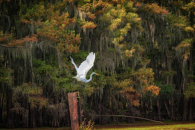Photograph - Egret Sanctuary by Sheena LeAnn