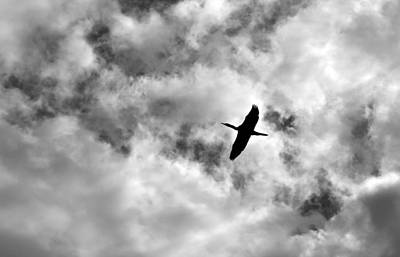 Photograph - Bird Silhouette by Mary Bedy