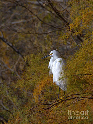Egret Surrounded By Golden Leaves Art Print