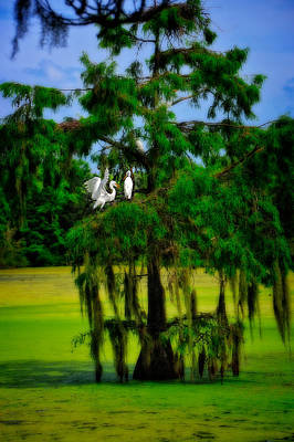 Photograph - Egret Tree by Harry Spitz