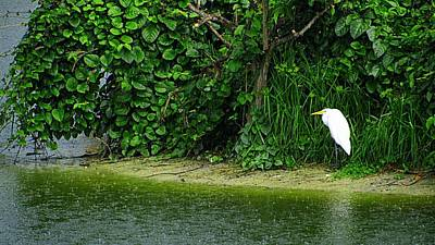 Egret Wakodahatchee Florida Wetlands Art Print