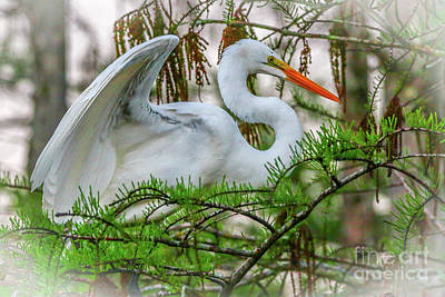 Photograph - Egret Wings In Tree by Tom Claud