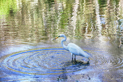 Photograph - Egret With A Fish by Diana Haronis