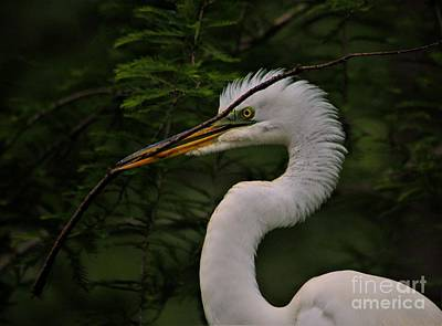 Photograph - Egret With Branch by Paulette Thomas