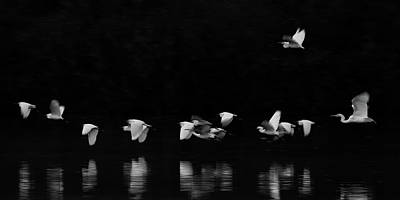 Photograph - Egrets 1265-011518-2cr-bw by Tam Ryan