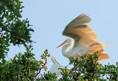 Photograph - Egrets At Last Light #1 by Richard Smith