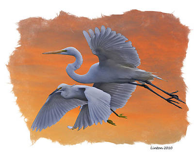 Egrets Great And Snowy Art Print