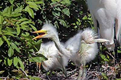 Pineapple - Egrets Nest by Jim Beckwith