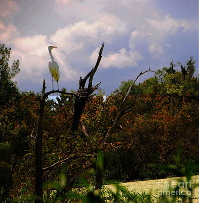 Photograph - Egret's View In Low Country by Jacqueline M Lewis