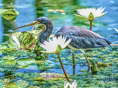 Painting - Egretta Tricolor by Judy Kay