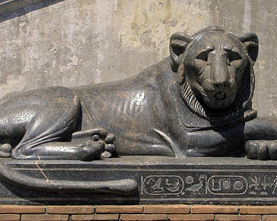 Photograph - Egyptian Lion by Jean Hall