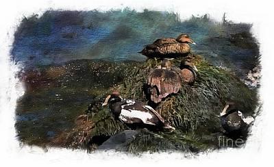 Photograph - Eider Ducks by Marcia Lee Jones