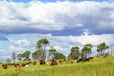 Eidsvold Charity Cattle Drive 2am-001850 Art Print by Andrew McInnes