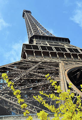 Photograph - Eiffel Tower And Yellow Blooms Springtime Paris France by Shawn O'Brien