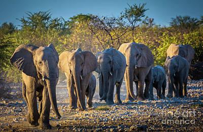 Eight Elephants Art Print