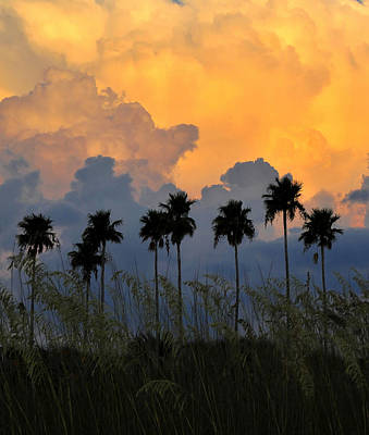 Eight Palms Print by David Lee Thompson