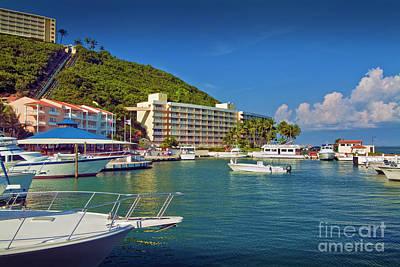 Photograph - El Conquistador Resort Marina by David Zanzinger