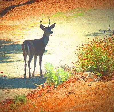 Photograph - El Sobrante Buck by Joyce Dickens