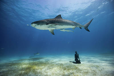 Sharks Photograph - El Tigre by One ocean One breath