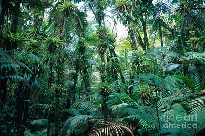 El Yunque National Forest Art Print by John Kaprielian
