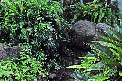 Photograph - El Yunque Rainforest by Gary Wonning