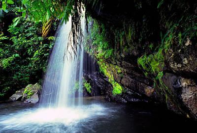 El Yunque Waterfall Print by Thomas R Fletcher