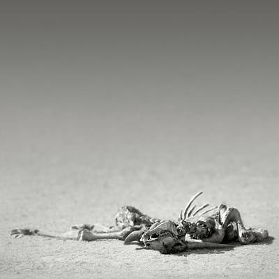 Royalty-Free and Rights-Managed Images - Eland skeleton in desert by Johan Swanepoel