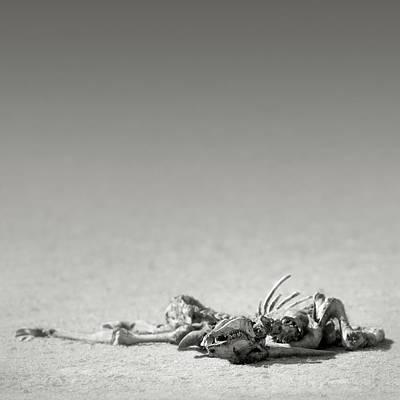 Arid Wall Art - Photograph - Eland Skeleton In Desert by Johan Swanepoel