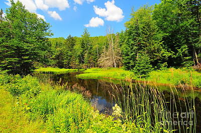 Carriage Road Photograph - Elbow Pond Road  by Catherine Reusch Daley