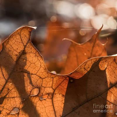 Photograph - Eldar Chronicles 4 by Paul Davenport