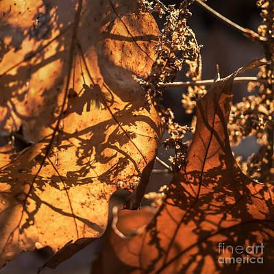 Photograph - Eldar Chronicles 7 by Paul Davenport