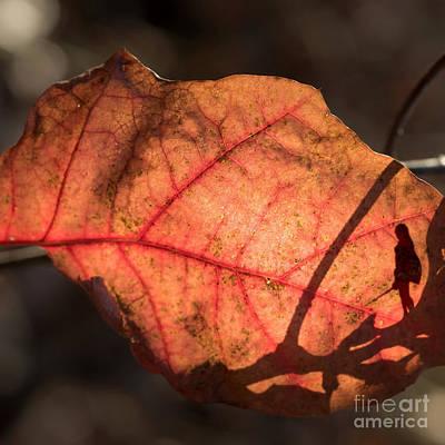 Photograph - Eldar Chronicles 8 by Paul Davenport