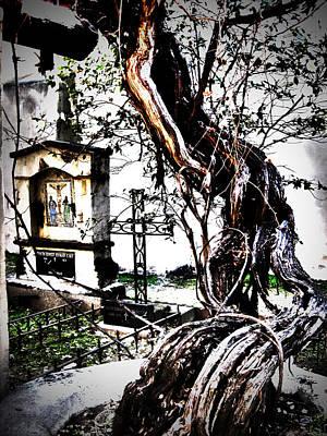 Grapevine Digital Art - Elder Grapevine by Mike Hill