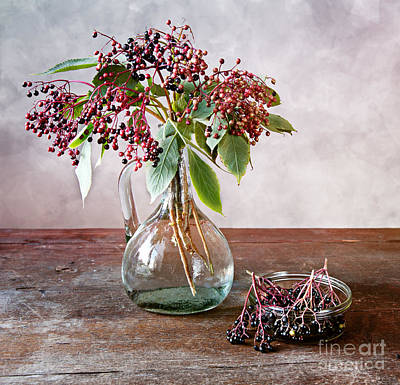 Brown Leaf Photograph - Elderberries 07 by Nailia Schwarz