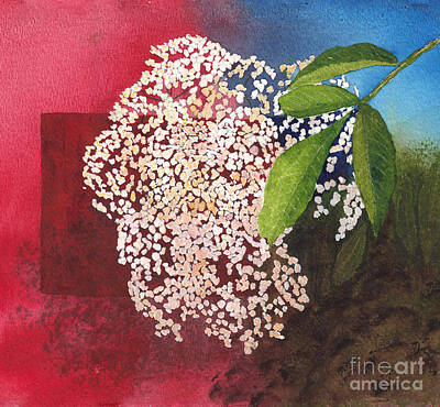 Painting - Elderberry Blossom In Watercolor by Conni Schaftenaar