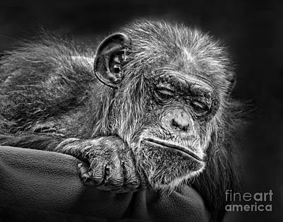 Jim Fitzpatrick Digital Art - Elderly Chimp Watching The Action Below by Jim Fitzpatrick