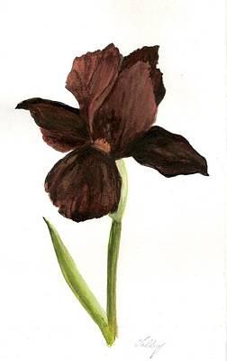 elderly Iris Art Print by Susan Tilley