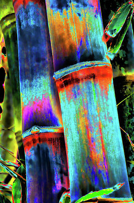 Photograph - Electric Bamboo 5 by Michael Raiman